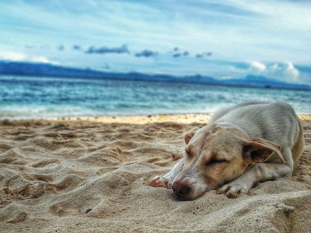 Hund, Entspannung, Urlaub, Gesund, gesundes Hunde Futter, Barfen